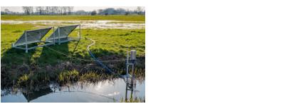 NP Scheldeland helpt de broedende weidevogels in de Kalkense Meersen