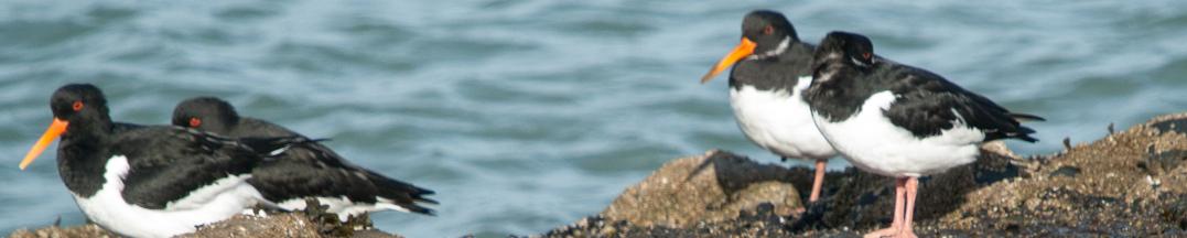 16/2: Daguitstap naar de overwinterende vogels in Zeeland.